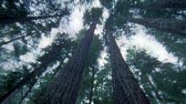 L'Autre Visage de la forêt, Another Side of the Forest
