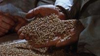 Grain Handling in Canada