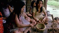 Life in the Amazon
