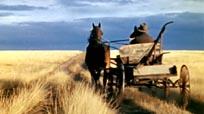 Windbreaks on the Prairies